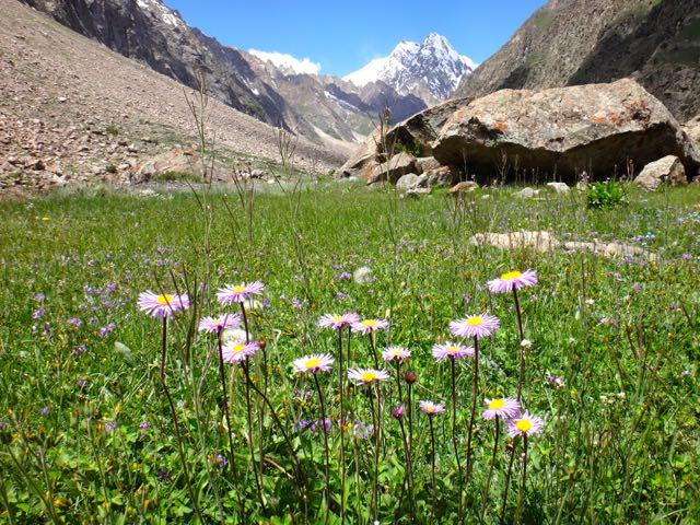Flores de alta montaña en el monte Umbro